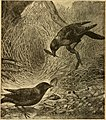 Animal life in the sea and on the land (1887) (14594036308).jpg