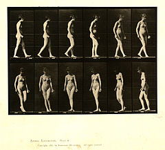 Animal locomotion. Plate 47 (Boston Public Library).jpg