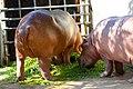 Animals in Thailand Photographs by Peak Hora (13).jpg