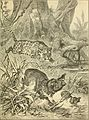 Animals in action; studies and stories of beasts, birds and reptiles; their habits, their homes and their peculiarities (1901) (14732435086).jpg