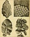 Annual report (1917) (18429433021).jpg