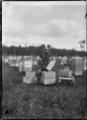 Apiary at Turua, 1920. ATLIB 293503.png