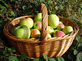 Apples in a basket.jpg
