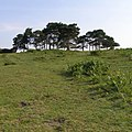 Approaching the disused car park on Deadman Hill, New Forest - geograph.org.uk - 467930.jpg