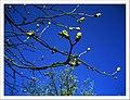 April Kastanie Parc Natural Mundenhof Freiburg - Master Botany Photography 2013 - panoramio (1).jpg