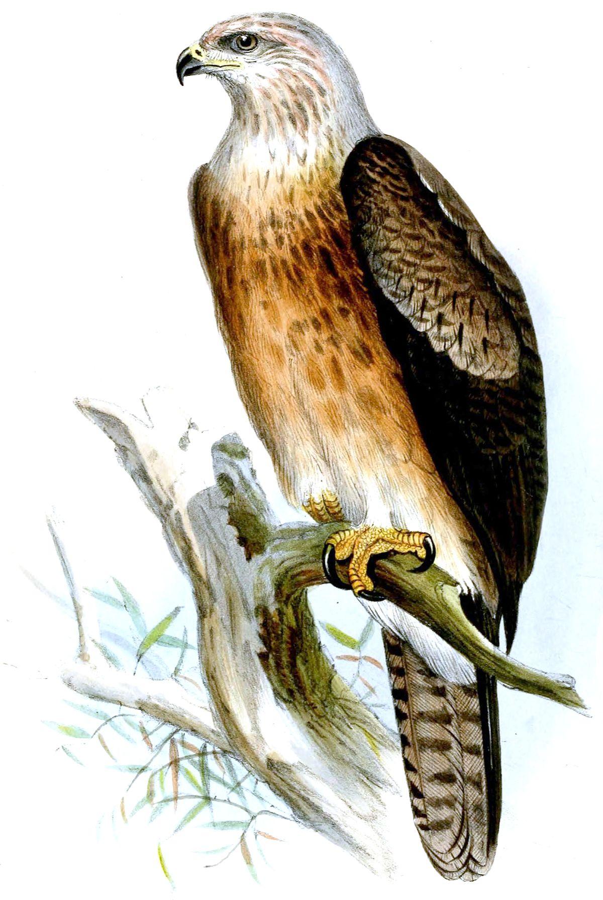 gurney u0026 39 s eagle