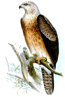 download Software Engineering Research, Management