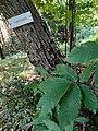 Arbore al interno del Parco del Monte Barro.jpg