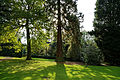 Arboretum Hadley Wood West Lodge Park Enfield London.jpg