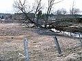 Arbre de la rivière - panoramio.jpg