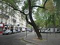 Arbre penché place Jacques-Demy - P1380688.JPG