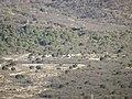 Asadores en el mirador del camino del cuatro, desde la colonia Salomon Abredop Saltillo Coahuila - panoramio.jpg