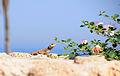 Ashkelon 17452 (14151090149).jpg
