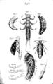 Assmuss parasiten 059.png