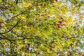 Au bonheur de l'automne au parc Mont-Royal (15525358511).jpg