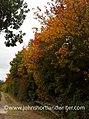 Autumn (22695136346).jpg