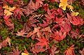 Autumn foliage 2012 (8253659960).jpg