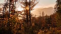 Autumn forest at sunset in Ajdna.jpg