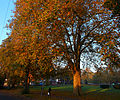 Autumnal Sutton Green, SUTTON, Surrey, Greater London (7).jpg