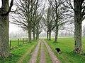 Avenue by Sports Field, RAF Halton - geograph.org.uk - 1259601.jpg
