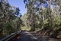 Avon NSW 2574, Australia - panoramio.jpg