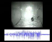 Ficheiro: BACE1 --- ratinhos apresentam-apreensão-actividade-que-não-correlato-com-sódio-canal de nível-ou-axonal-1750-1326-5-31-S1.ogv