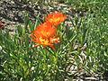 BCBG Flowers 05.JPG