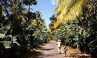 Banana plantation in Sao Domingos.jpg