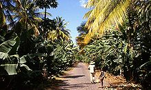 Banana plantation in Sao Domingos.jpg
