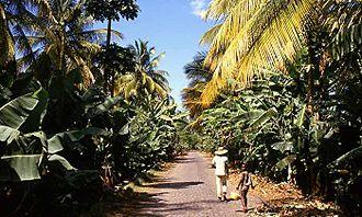 São Domingos, Cape Verde - Banana plantation near São Domingos.