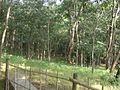 Baneshwar Jungle.jpg