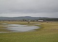 Barnacle Geese at Caerlaverock - geograph.org.uk - 326026.jpg