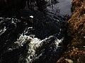 Bavorov - řeka Blanice - panoramio.jpg