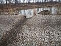 Beaver commuting trail Miller Woods.jpg