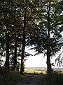 Beeches, Pound's Farm - geograph.org.uk - 228698.jpg
