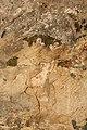 Begijnhofkerk, muurschildering , de Kroning van Maria , detail - 373812 - onroerenderfgoed.jpg