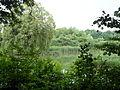 Benther Berg Vorland Amphibienbiotop.JPG