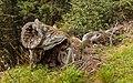 Bergtocht van Cogolo di Peio naar M.ga Levi in het Nationaal park Stelvio (Italië) 25.jpg