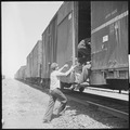 Between Bakersfield and Fresno, California. On the Freights. Hopping a box car in a hurry - NARA - 532073.tif