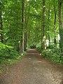 Between The Trees - geograph.org.uk - 816747.jpg