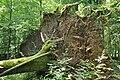 Bialowieza National Park in Poland0090.JPG
