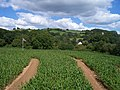 Bickleigh , Bickleigh Maize Maze - geograph.org.uk - 1223813.jpg
