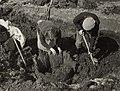 Bij een archeologisch onderzoek, ingesteld op het land van Jaap Vink, bij het kerkje 'Stompetoren', door de Rijksdienst voor Oudheidk. Bodemonderzoek is een 'Tonput' ontdekt, 3 april 1952. A, NL-HlmNHA 1478 25900 K 38.JPG