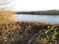 Birds on lake on Milton Common - geograph.org.uk - 1071230.jpg