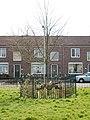 Bk004 Willem-Alexanderboom.jpg