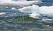 Black ice growler upernavik 2007-07-07a.jpg