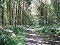 Blinks Wood - geograph.org.uk - 1417219.jpg
