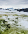 Bloom of snow algae on Anchorage Island, Antarctic Peninsula.webp