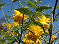 Blume 2.jpg