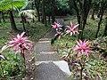 Blumen. - panoramio.jpg